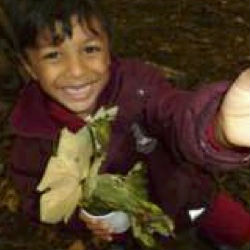 Year 2 explore the woods in autumn