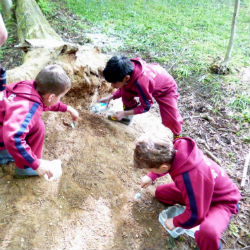 Year 2 went minibeast hunting
