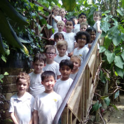 Yr1 explored the rainforest