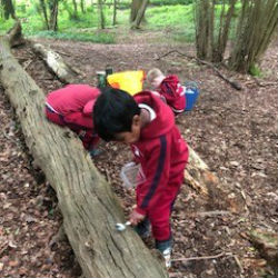 Year 2 trip to the woods